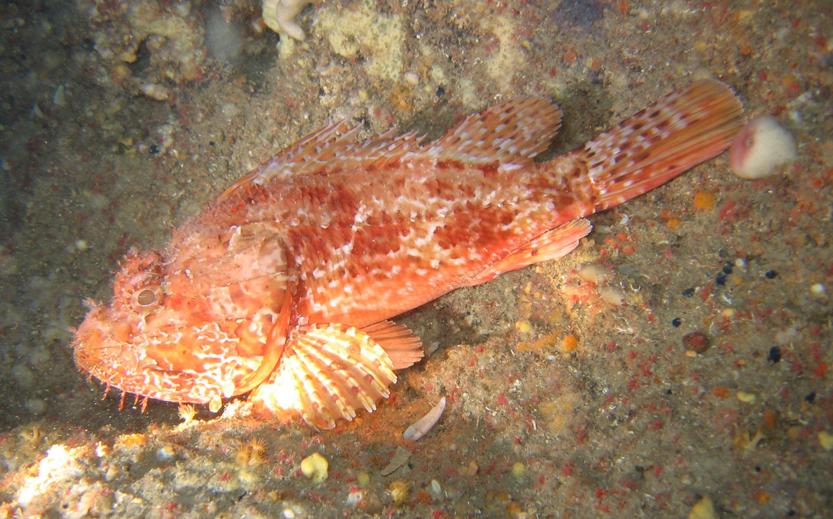 Diving in sardinia offering you best diving spots on the for Red sea fish